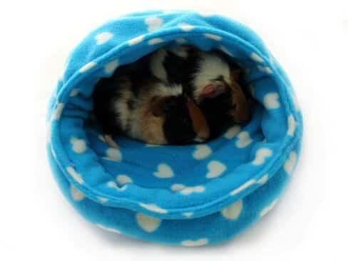 how to make a guinea pig snuggle sack